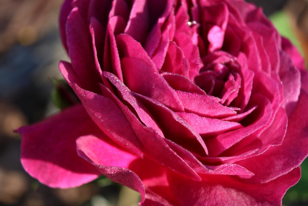 Vandaag bloemen bezorgen